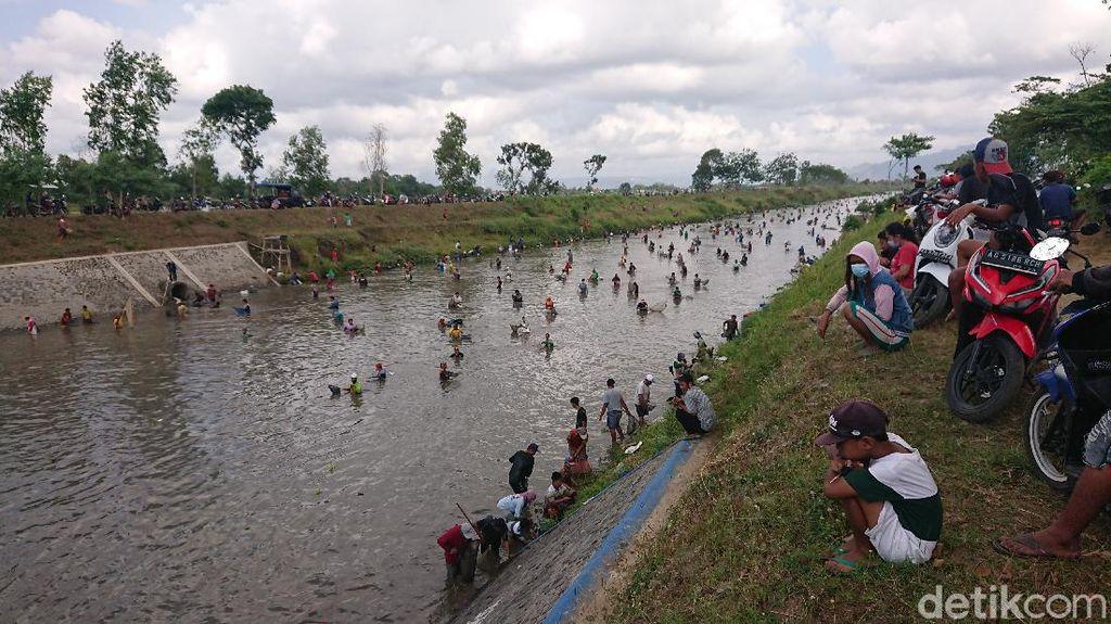 Warga Tulungagung Berebut Ikan di Aliran Dam yang Dikuras
