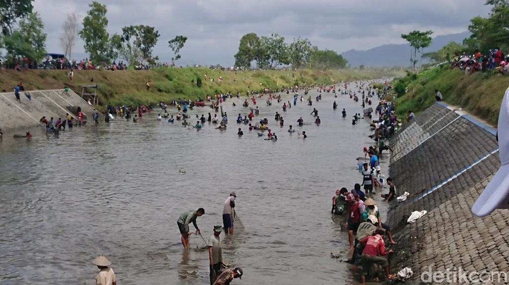 Saat Ribuan Warga Tulungagung Berburu Ikan Saat Dam Boyolangu Dikuras