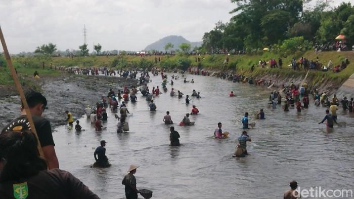 Warga berebut ikan di aliran sungai dam Boyolangu, Tulungagung yang sedang dikosongkan, Sabtu (4/9). Warga menanti sejak pagi untuk membawa pulang ikan sebanyak-banyaknya.