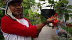 Pembuatan Kue Strawberry dari Kebun di Bantaran Kali Umbulharjo