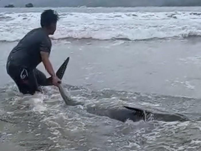 Lumba-lumba Terdampar di Pantai Sidem Tulungagung