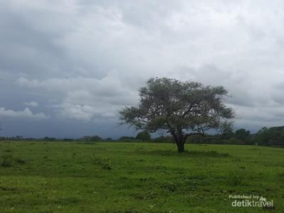 Taman Nasional Baluran si Africa Van Java