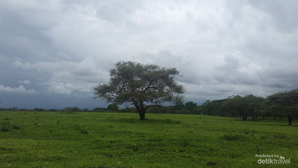 TNB di juluki Africa Van Java karena keindahannya alamnya yang indah mulai dari padang savana, hutan, satwa dan pantai.