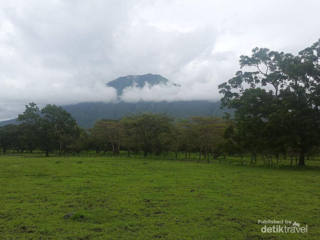 Potret Keindahan Taman Nasional Baluran bak Alam Afrika