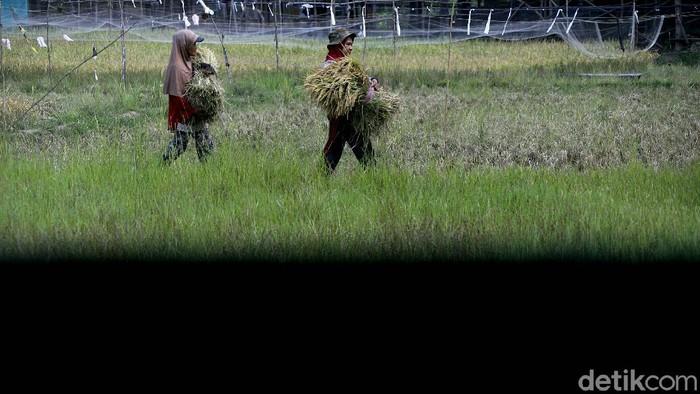 Energi baru dan terbarukan (EBT) terus didorong pembangunannya di Indonesia. Kehadiran PLTS ini pun turut beri kemudahan bagi para petani di Muara Enim, Sumsel.