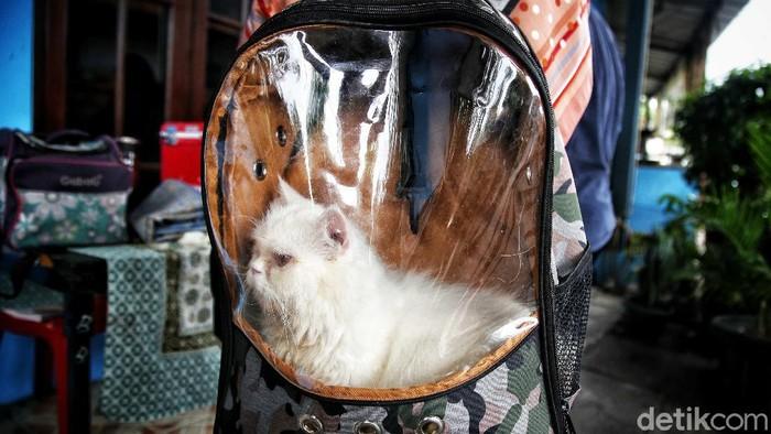 Dokter Hewan dan Petugas dari Suku Dinas Ketahanan Pangan, Kelautan dan Pertanian (KPKP) memberikan vaksin rabies kepada hewan peliharaan warga di kawasan RW 06, Sunter Jaya, Jakarta Utara, Senin (6/9).