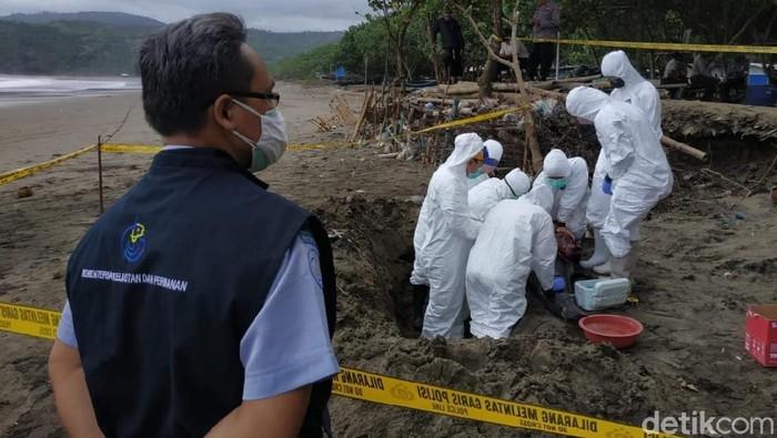 FKH Unair Lakukan Penelitian Lumba-lumba yang Mati Terdampar di Tulungagung