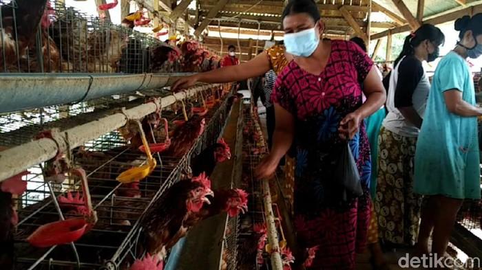 harga telur ayam di Lamongan anjlok