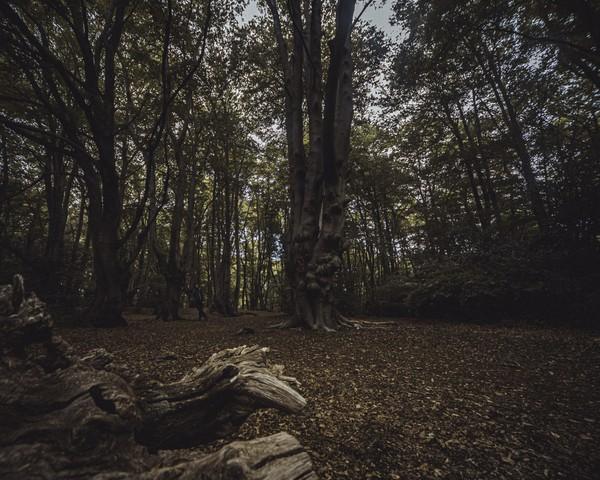Pada tahun 1966 pembunuh berantai Harry Roberts juga menjadikan Epping forest sebagai tempat persembunyian.(Getty Images/iStockphoto)