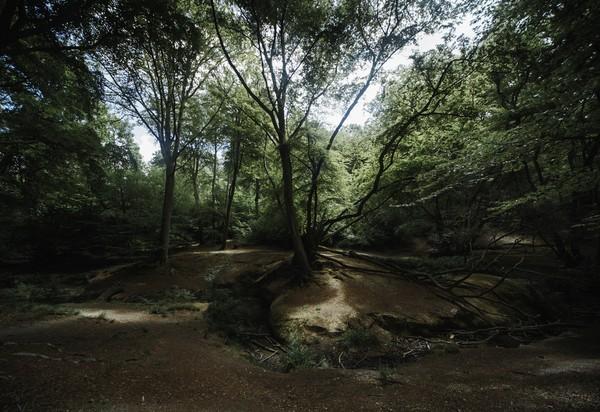 Akhirnya, hutan ini kerap jadi tempat para pembunuh dan pepohonan adalah makamnya. (Getty Images/iStockphoto)