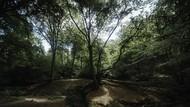 Terlilit Utang, Pria Ini Tinggal di Hutan Selama 17 Tahun Bersama Mobilnya