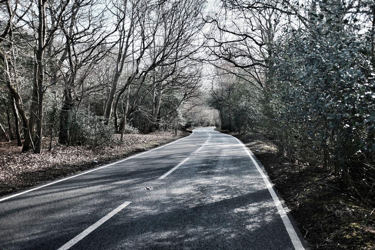 Hutan Epping di London