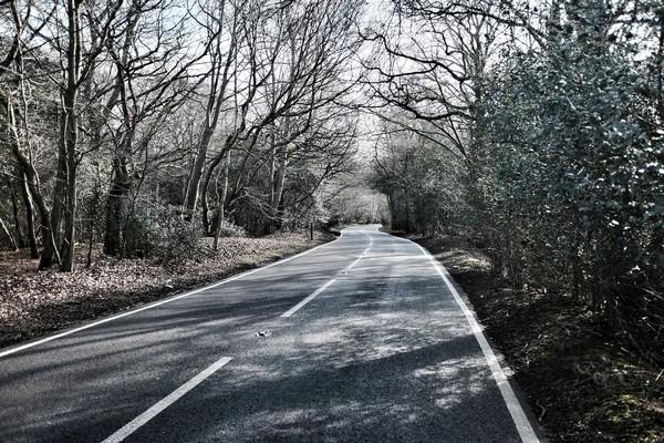 Hutan Epping membentang seluas 6.000 hektare di antara London dan Essex. (Getty Images/iStockphoto)