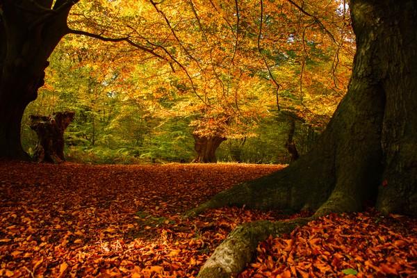 Meski angker, namun pemandangan dari hutan ini memesona tiap musim. (Getty Images/iStockphoto)
