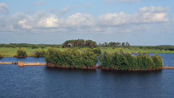 hutan mangrove Benin