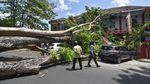 Mobil dan Motor Ringsek Tertimpa Pohon di Mataram