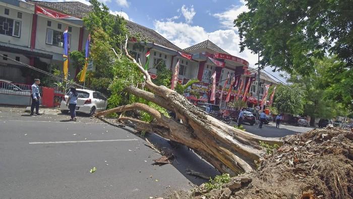Sebuah pohon berdiameter kurang lebih tiga meter tumbang menutupi badan jalan HOS Cokro Aminoto di samping Kantor Gubernur NTB di Mataram, NTB, Selasa (7/9/2021). Sebuah mobil ringsek dan lima unit sepeda motor rusak tertimpa pohon dan tidak ada korban jiwa dalam kejadian tersebut.ANTARA FOTO/Ahmad Subaidi/hp.
