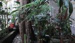 Potret Rumah Masa Kecil Desy Ratnasari, Masuk Gang Sempit Tapi Penuh Kenangan