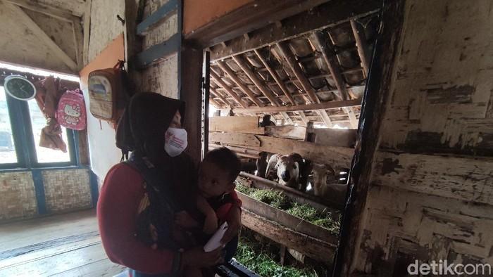Satu keluarga di Cianjur tinggal satu atap dengan kandang kambing