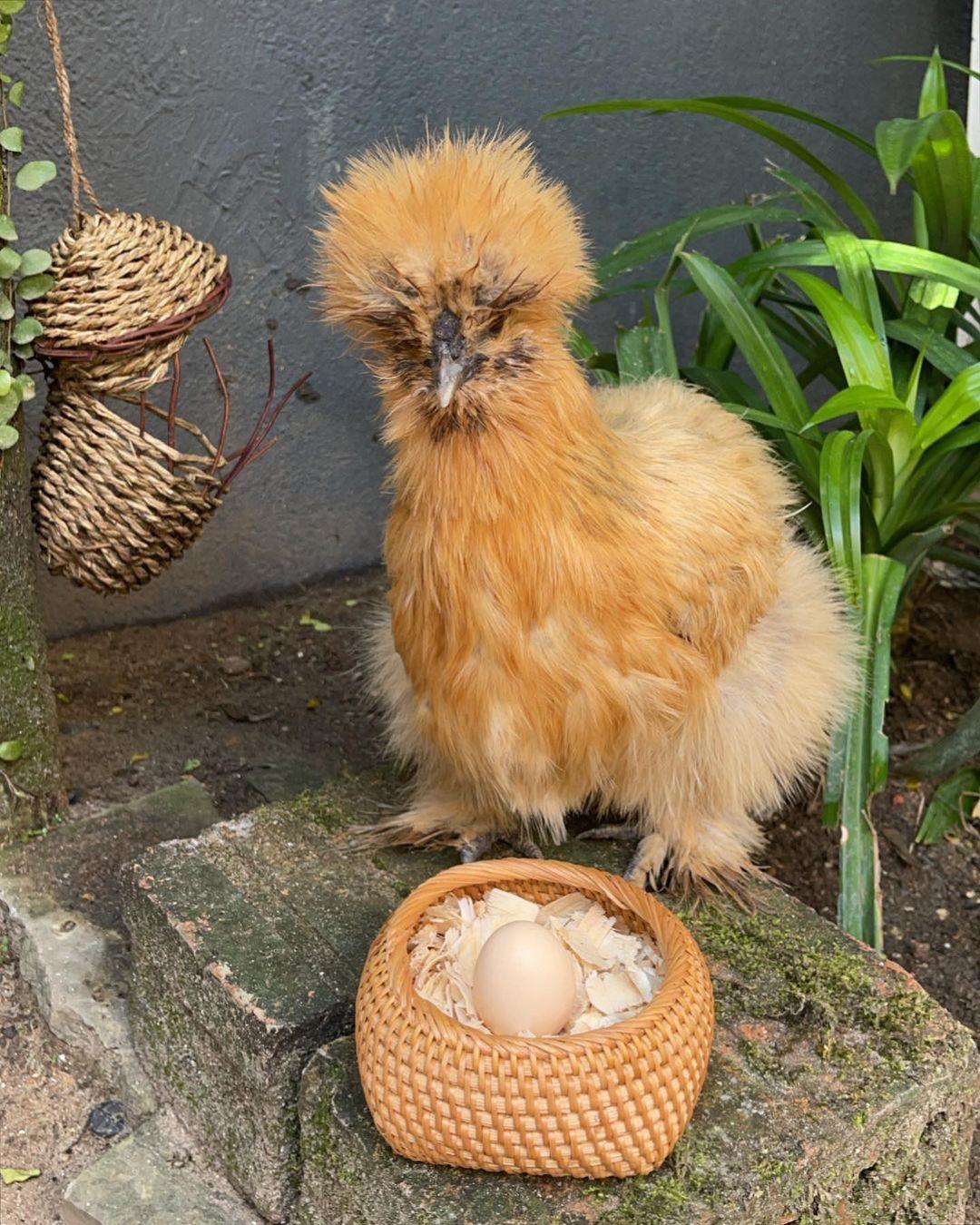 Sosialita Singapura Jamie Chua Kini Sibuk Tanam Buah dan Pelihara Ayam