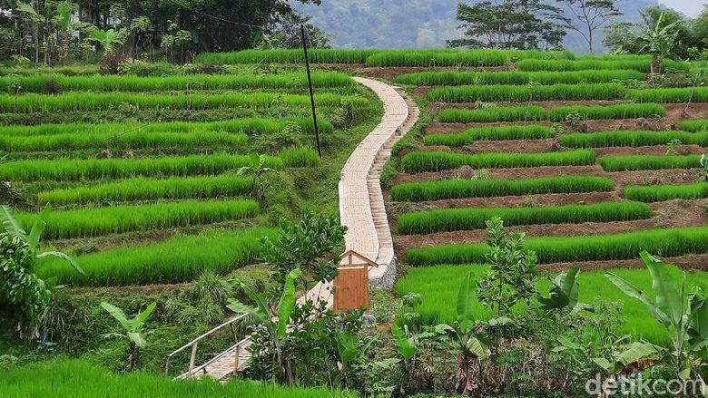 Hutan Hujan Sentul