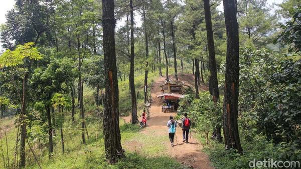 Pemandangan hutan pinus, kebun kopi, dan hamparan padi bisa ditemukan saat anda melakukan trekingke tempat ini.