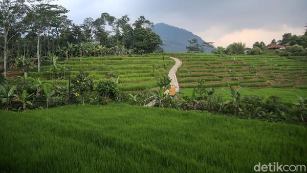 Hutan Hujan Sentul menempati area hutan pinus seluas 26 hektar yang berlokasi di Kampung Cigobang, Desa Karang Tengah, Sentul, Kabupaten Bogor.