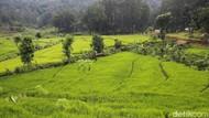Arti Intensifikasi dalam Dunia Pertanian Beserta Contohnya