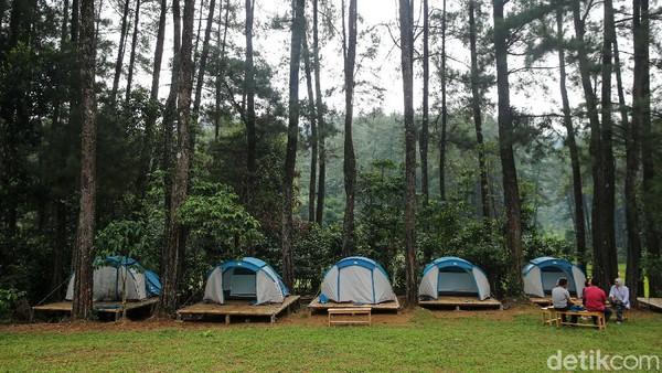 Setelah melewati sawah, pengunjung akan disuguhi hijaunya Hutan Pinus.
