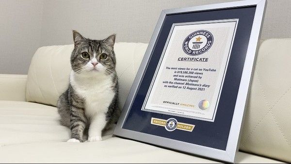 Kucing berjenis Scottish Fold bernama Motimaru menjadi catatan baru di Guinness World Record. Dia tercatat sebaagai kucing yang paling banyak ditonton di Youtube.