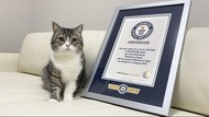 Potret Motimaru, Kucing Gemoy yang Dicatat Guinness World Record