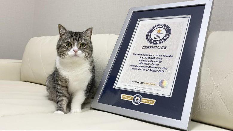 Motimaru, kucing gemas di Jepang