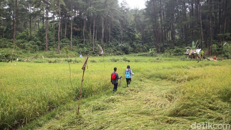 Trekking Hutan Hujan Sentul