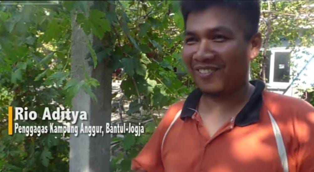 Inspiratif! Kisah Guru SD di Bantul yang Sukses Jadi Petani Anggur