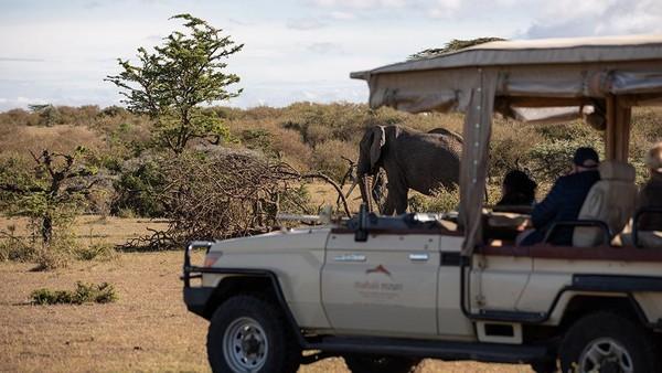 Saat safari traveler bisa melihat pemandangan satwa liar yang menarik. Hewan liar yang berkeliaran di dataran Kenya di antarnya rusa kutub, gajah, zebra, singa, macan tutul, cheetah, impala hingga kijang.