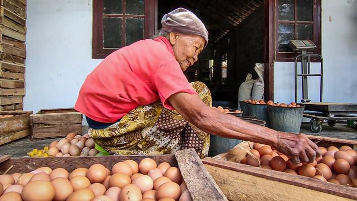 Peternak bagi-bagi telur ayam gegara harga anjlok