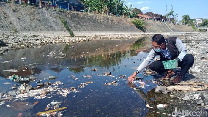 Petugas penyuluh perikanan KKP mengecek kematian ikan sungai Dengkeng, Klaten, Kamis (9/9/2021)