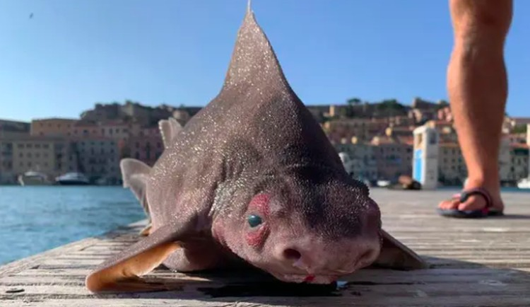 ikan aneh
