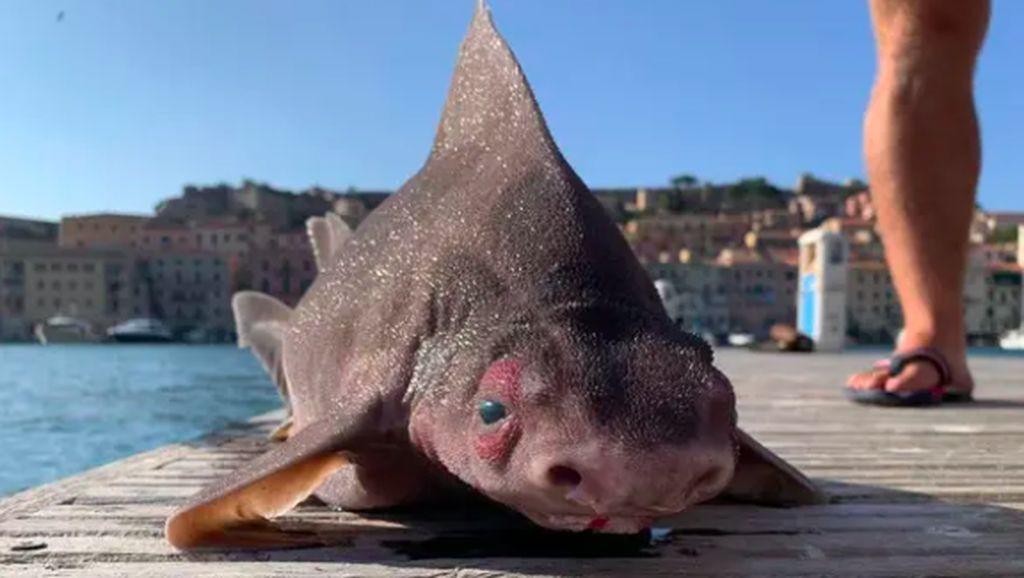 5 Ikan Berwujud Paling Aneh, Ada dari Indonesia