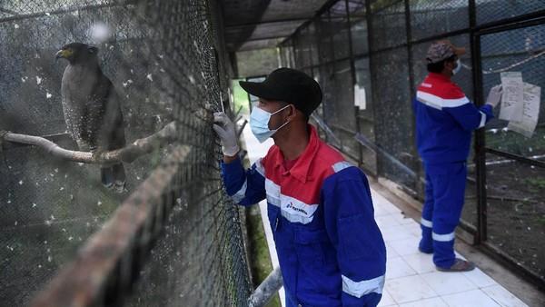 Pusat Konservasi Elang Kamojang (PKEK) ini jadi salah satu tempat rehabilitasi untuk elang sebelum dilepasliarkan.