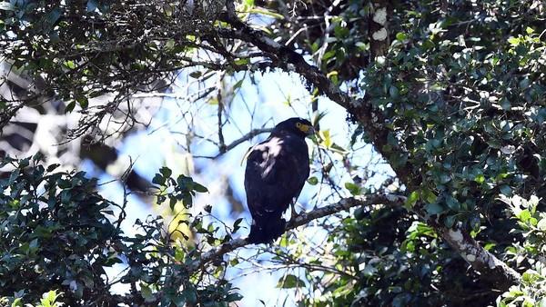 Pusat Konservasi Elang Kamojang (PKEK) yang dibentuk PT Pertamina Geothermal Energy bekerja sama dengan BBKSDA Jawa Barat dan Forum Raptor Indonesia di tahun 2014 itu telah merehabilitasi dan melepasliarkan sebanyak 80 elang dari berbagai jenis kembali habitatnya.