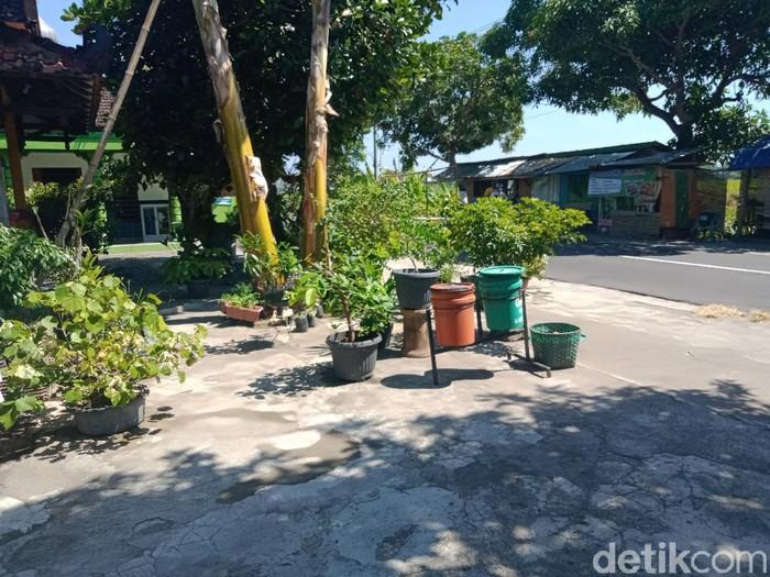 Pencuri tanaman hias berkeliaran di Klaten, Jumat (10/9/2021).