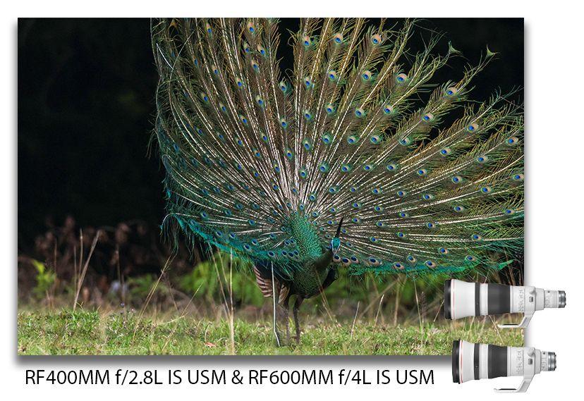 Canon RF 400mm f/2.8L IS USM dan Canon RF600mm f/4L IS USM