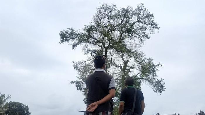 Lokasi burung-burung pipit berjatuhan di Bali