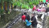 Jatuh Bangun Emak-emak di Lumajang Berebutan Tangkap Ikan di Sungai