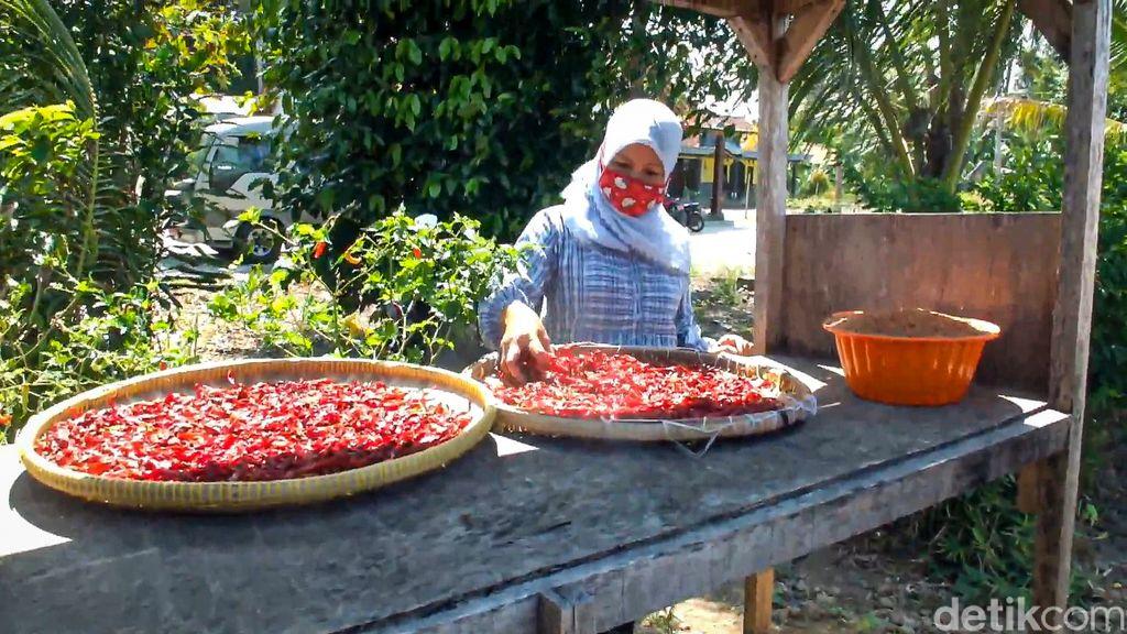 Harga Cabe Anjlok Kelompok Petani Wanita Ini Olah Cabe Jadi Abon dan Sambal
