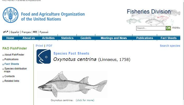 Hiu mirip babi (Foto: Screenshot FAO-Aquafind)