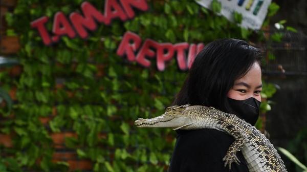Pengunjung foto bersama dengan hewan reptil di wahana taman reptilia TMII, Jakarta, Minggu (12/9/2021).