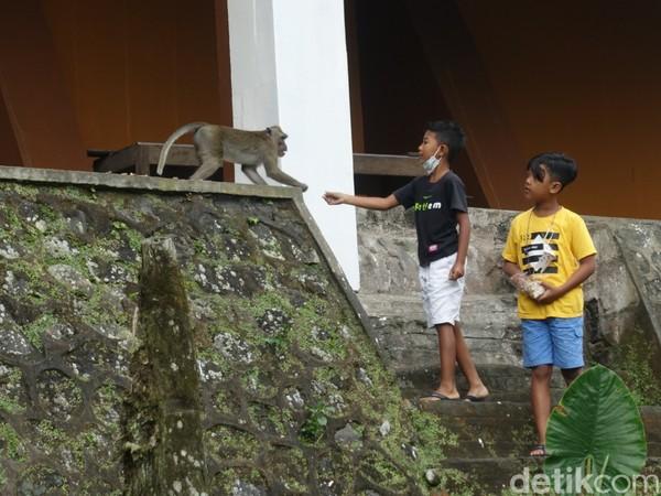 Monyet ekor panjang di sekitar kawasan wisata menjadi atraksi bagi anak-anak. (Jauh Hari Wawan S/detikcom)