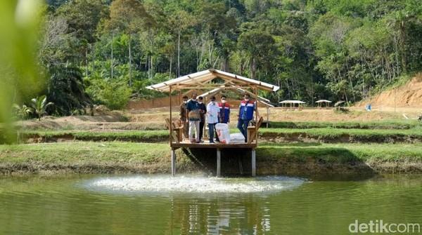 Wisata buatan ini dibangun pada tahun 1991 dan dimanfaatkan untuk PLTA. Namun kini danau tersebut dijadikan sebagai tempat wisata, karena memiliki pemandangan alam yang sangat cantik. Sehingga sering disebut Raja Lima dari Riau. Danau buatan tersebut dapat dilihat dari Puncak Kompe, salah satu spot instagramable di desa ini. Raja Adil Siregar/detikcom